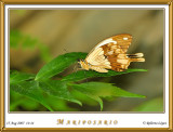 DSC_3897_mariposario1.jpg