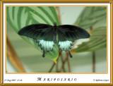 DSC_3750_mariposario1.jpg