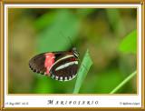 DSC_4115_mariposario1.jpg