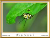 DSC_4089_mariposario1.jpg