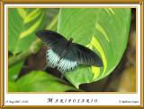 DSC_3949_mariposario1.jpg