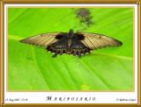 DSC_4005_mariposario1.jpg