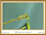 DSC_4075_mariposario1.jpg