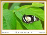 DSC_4102_mariposario1.jpg