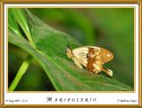 DSC_4200_mariposario1.jpg