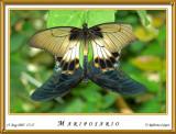 DSC_4230_mariposario1.jpg
