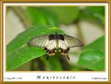 DSC_4196_mariposario1.jpg