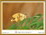 DSC_4169_mariposario1.jpg