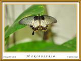 DSC_4167_mariposario1.jpg