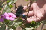 Ugyen saves the butterfly!