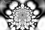 Floral-pattern.jpg