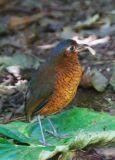 Ecuador (2006)
