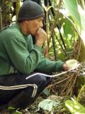 Angel Paz calling a Moustached Antpitta (Washington) with cup of worms in his hand