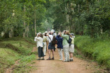 The Royal Mile - Budongo Forest