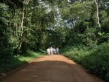 Busingiro Forest