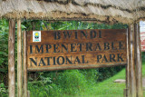 Gorilla Trek -- Bwindi Impenetrable National Park