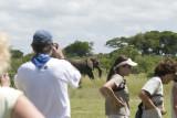 Bush break interrupted by elephant