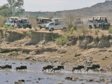More vehicles than wildebeest