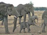 Elephants, Hippos, Hyenas and grazers