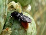 Bug Festing On Agave