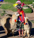 Lady Quechua With Alpacas, Cuzco Market