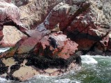 Seals On Paracas Islands