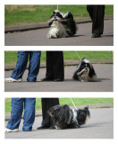 dog has photo taken  -   picture gets reviewed  -   dog gets bored