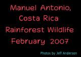 Manuel Antonio, Costa Rica, Rainforest Wildlife (February 2007)