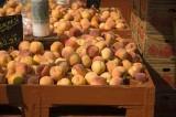 Farmer's Market, Olympia