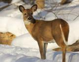 winter_wildlife