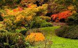 Arboreteum Color