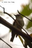 Whistler, Mangrove @ Pulau Hantu