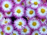Purple flowers at Babylon Long Island Town Hall
