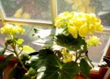 A plant called Vinnie