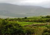 Grazing near Killarney