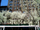 Spring on Madison Avenue