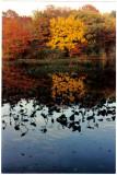 Bellmore autumn