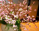 Indoor cherry blossoms at the Irish Consulate