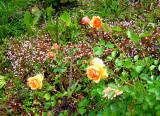 Garden near Coit Tower