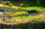 A terraced garden in Tiburon