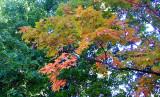 1st color 2007
