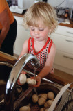 timo tvättar champinjoner