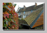 Autumn leaves on the wash-house