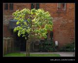 Wightwick Manor #03