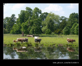 Shugborough Estate #17