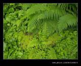 Biddulph Grange #09