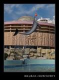 Dolphin #1