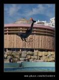 Dolphin #3