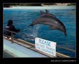 Dolphin #4