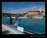 Dolphin #5